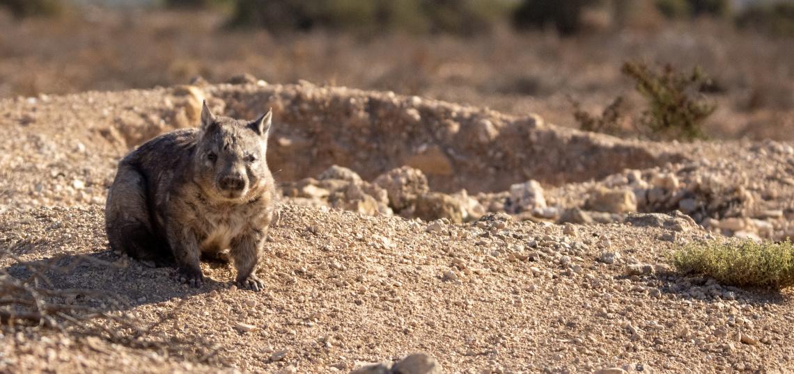 The Australian Mammal Society